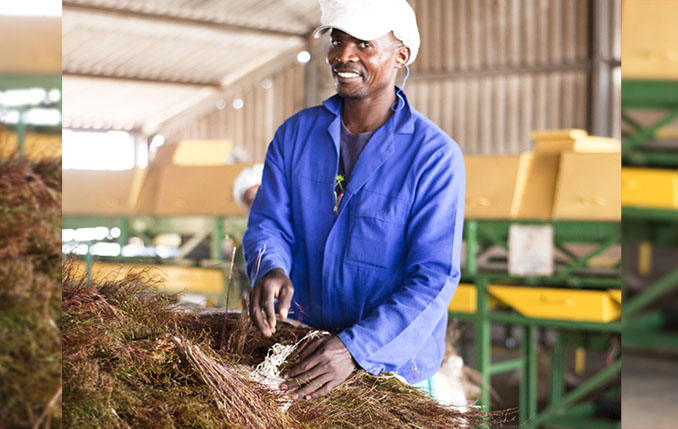 Rooibos research gets R3-Million boost